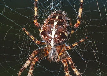 Spider Removal in the Carolinas and Virginia