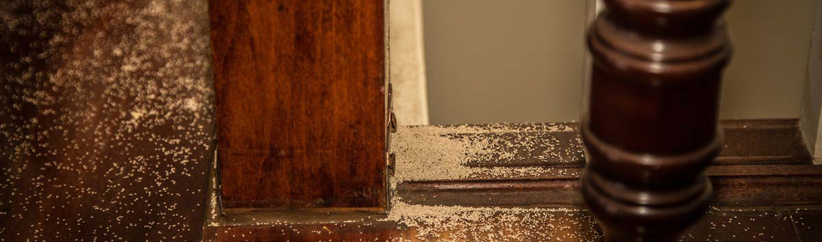 termite damage 2