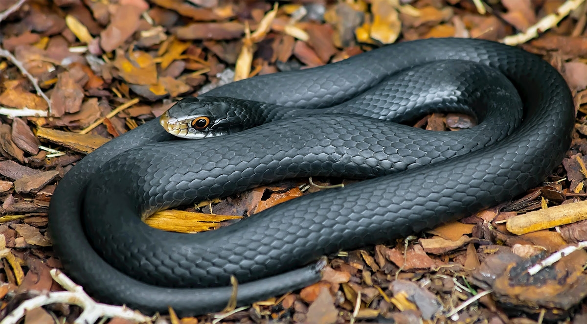 How To Keep Snakes Out of Your Home and Yard
