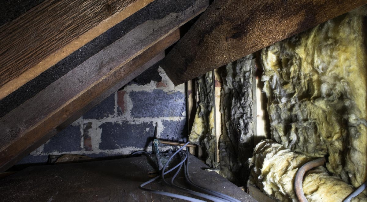 9 Pests That Could Be Hiding in Your Attic Right Now