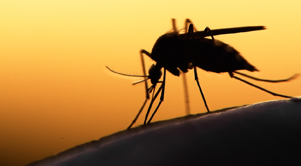 Controlling Mosquitos In and Around Your Home
