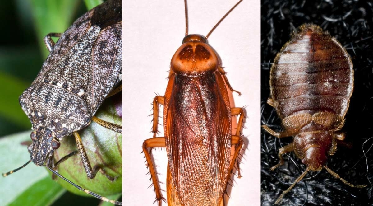 Five Common Fall Pests in North Carolina